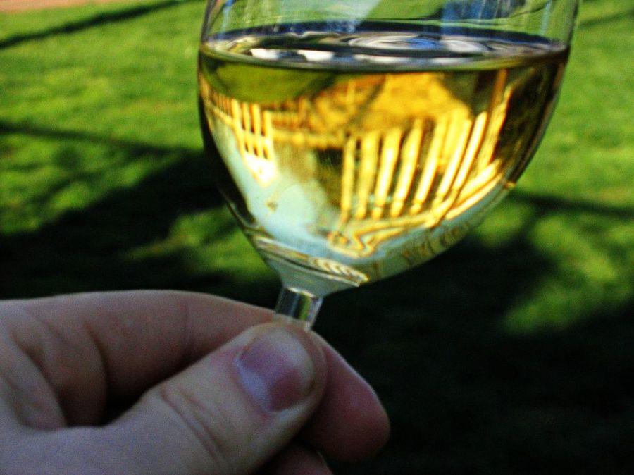 1200px-Chardonnay-UVa.jpg
