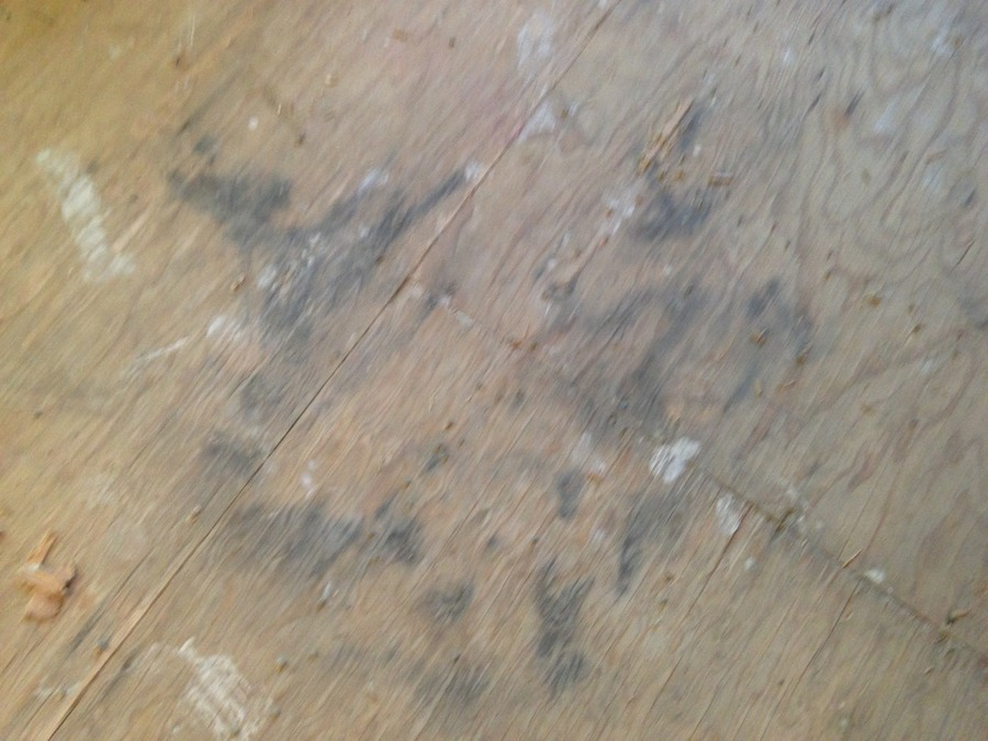 Is This Mold On Our Subfloor Diy Forums