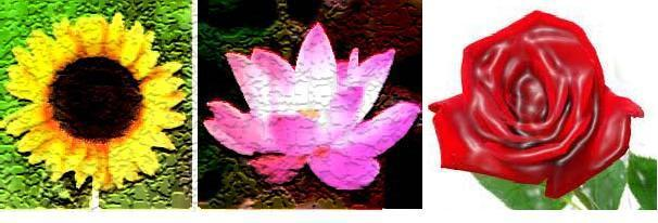 Astrological Advantages Of Three Beautiful Flowers My Astrology Signs